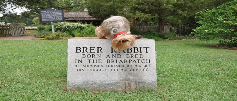 Ben-Looks-for-Brer-Rabbit2