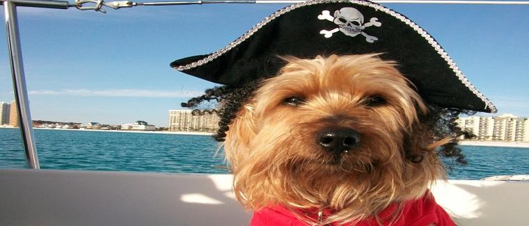 Ben-in-Pirate-Hat1
