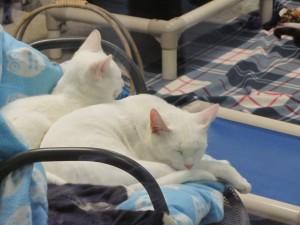 LifeLine, Cats
